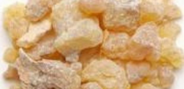 (מאמר דעה) שמן הלבונה - על סוגיו וסגולותיו